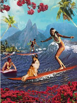 Lassie Surfing Hawaii Surfer Surfers